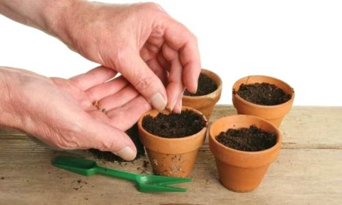 How pot seeds can be beneficial?